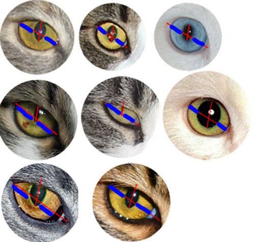 строения кошачьего глаза,